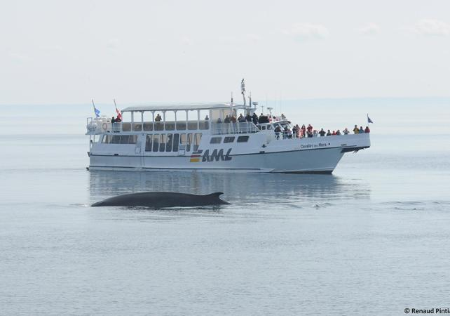 riviere du loup whale watching reviews